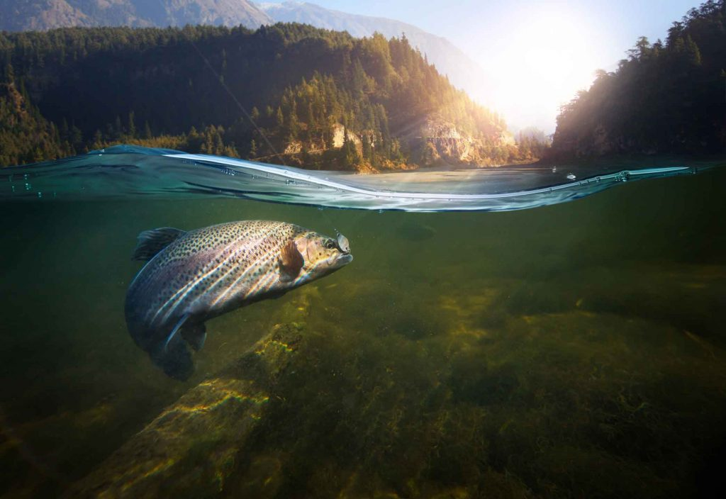 Fish in a hook in a river